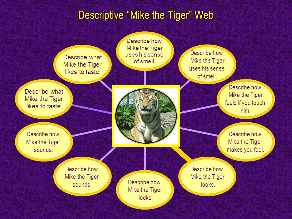 Descriptive Mike the Tiger Web