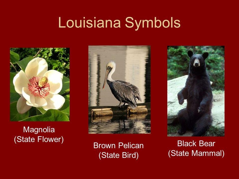 Louisiana Symbols Magnolia (State Flower) Black Bear (State Mammal)