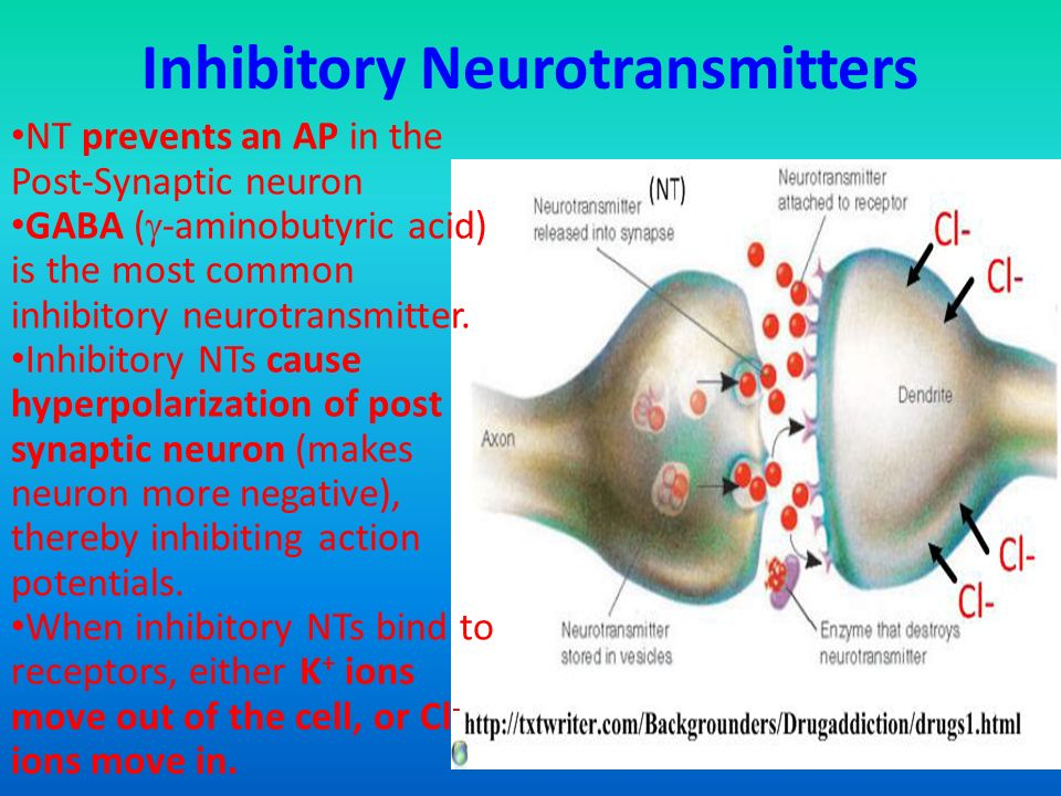 E4 Neurotransmitters and synapses - ppt video online download
