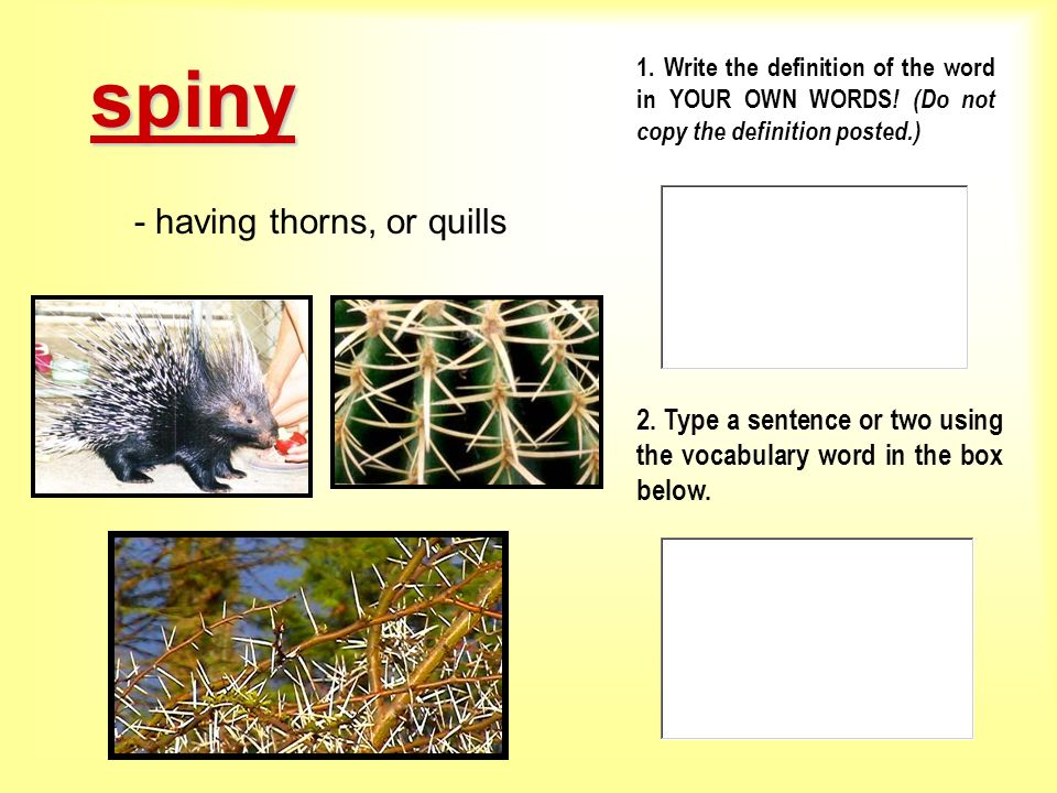 - having thorns, or quills