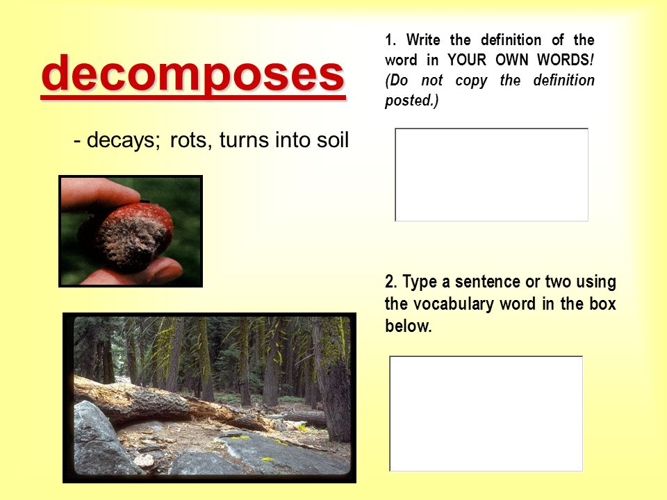 Saguaro cactus interactive vocabulary powerpoint ppt for Soil sentence