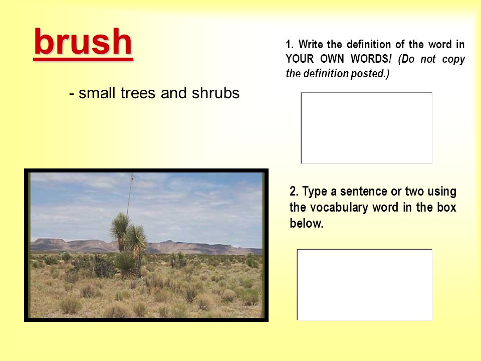 - small trees and shrubs
