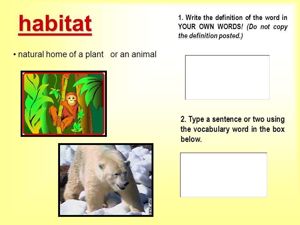 habitat natural home of a plant or an animal