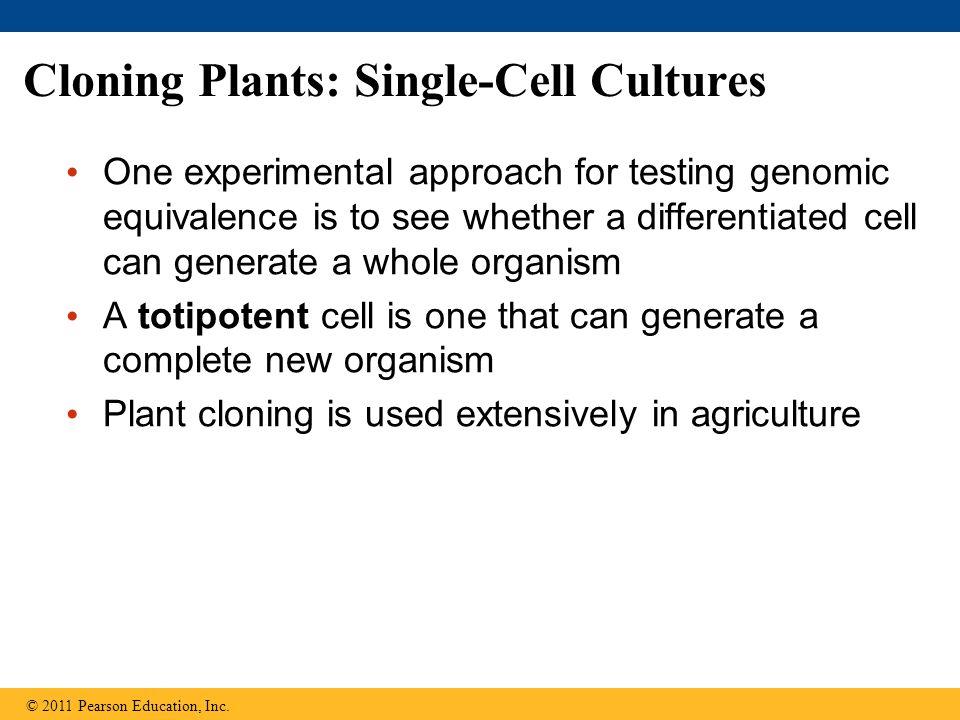 download plant dna fingerprinting