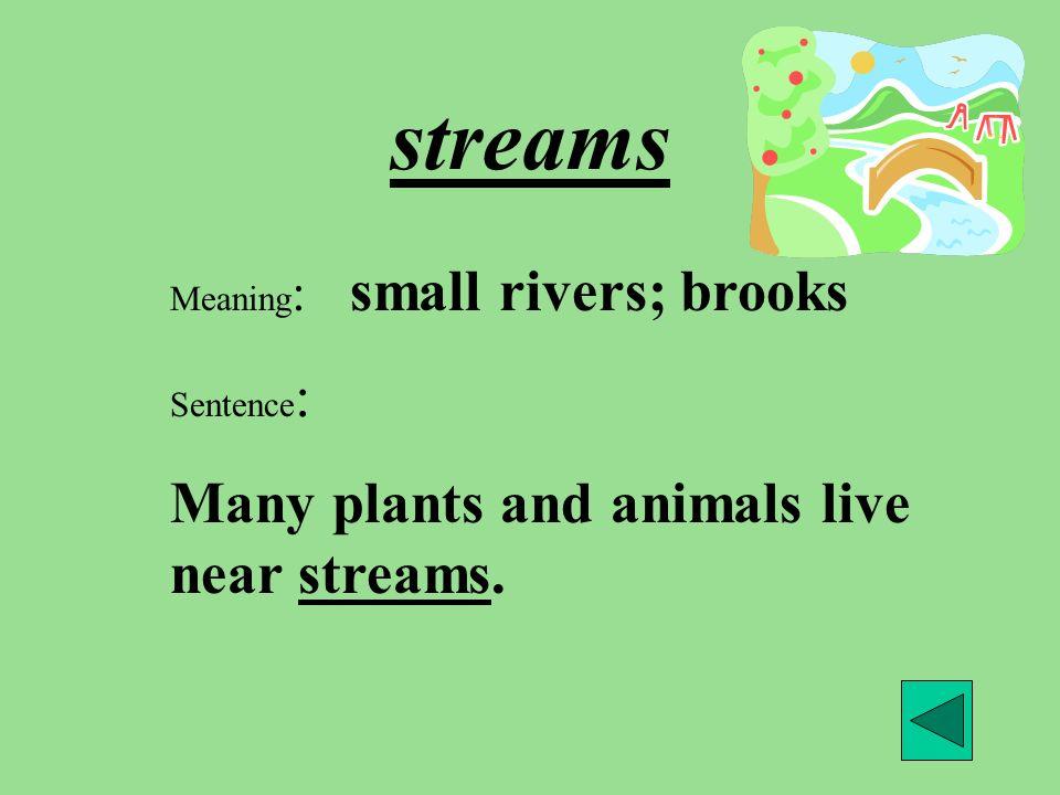 streams Many plants and animals live near streams.