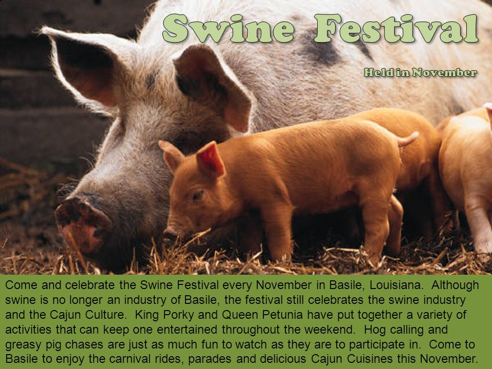 Swine Festival Held in November