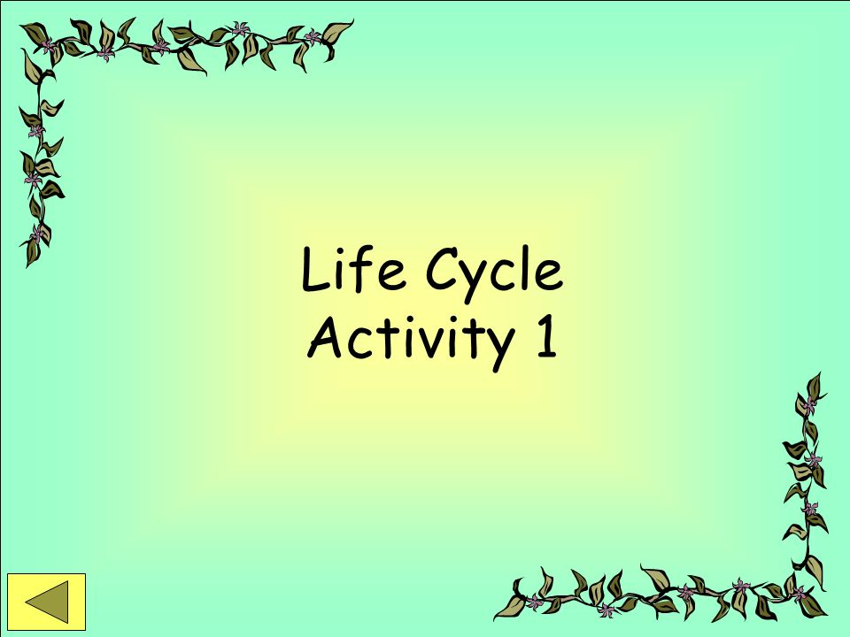 Life Cycle Activity 1