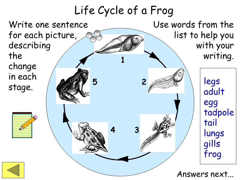 Life Cycle of a Frog Write one sentence for each picture, describing