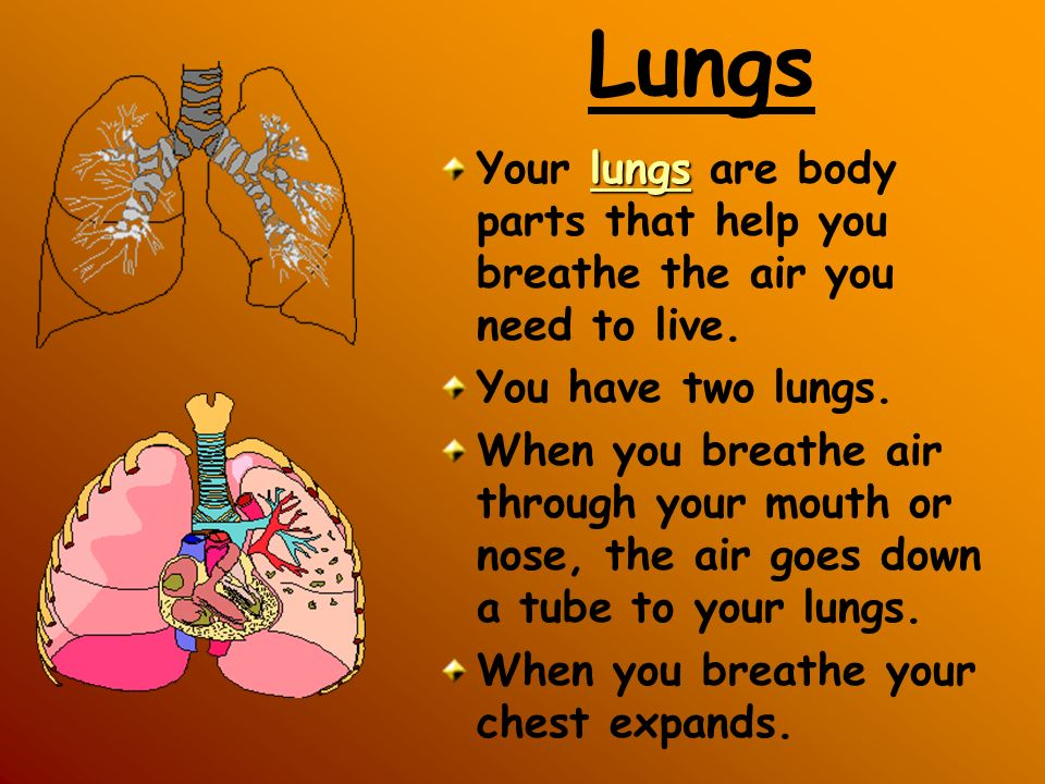 Lungs Your lungs are body parts that help you breathe the air you need to live. You have two lungs.