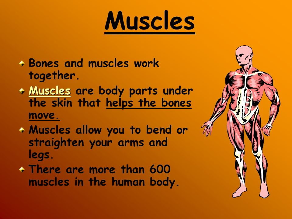 Muscles Bones and muscles work together.