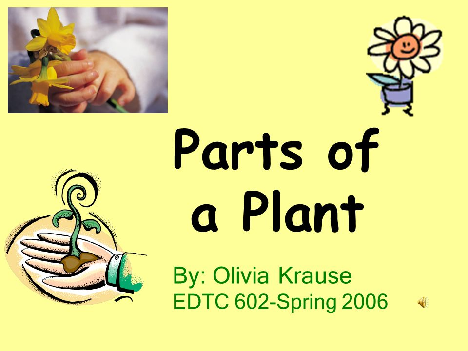 Parts of a Plant By: Olivia Krause EDTC 602-Spring 2006