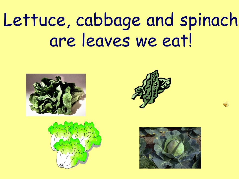 Lettuce, cabbage and spinach