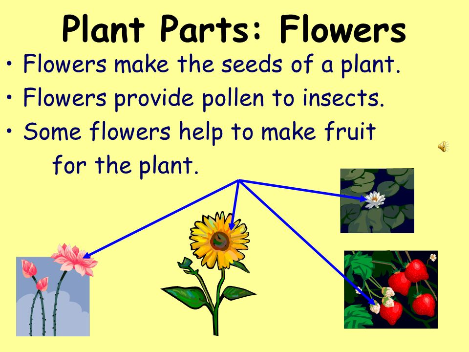 Plant Parts: Flowers Flowers make the seeds of a plant.
