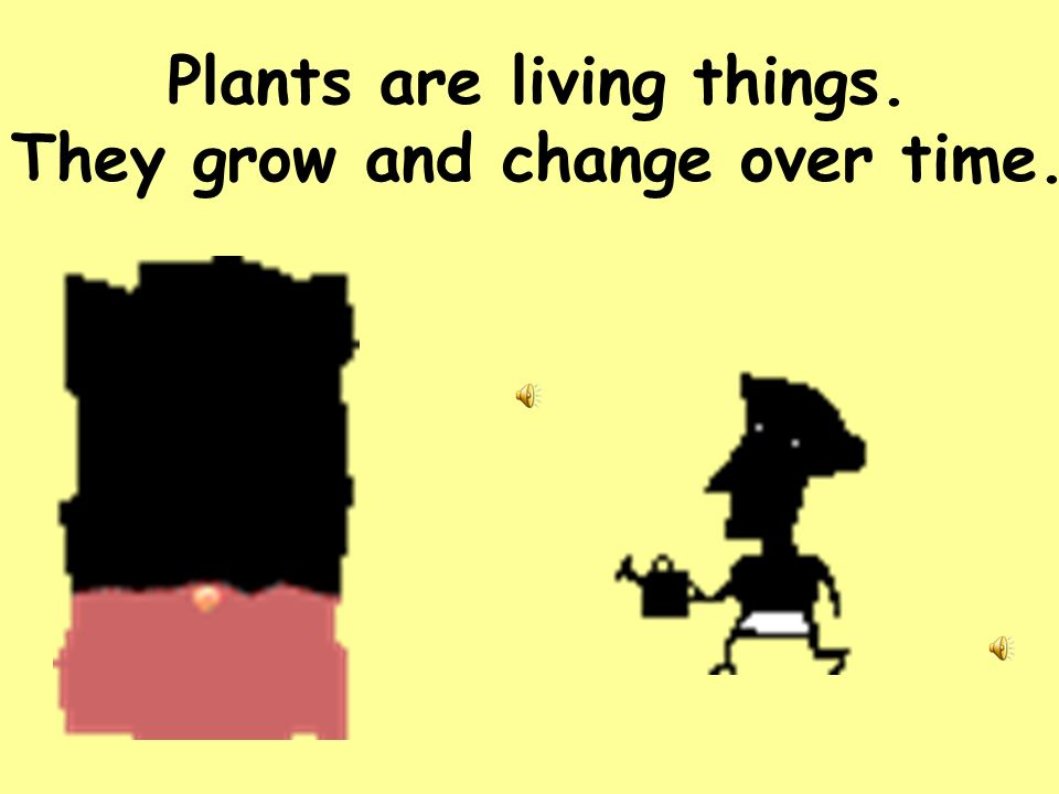Plants are living things. They grow and change over time.