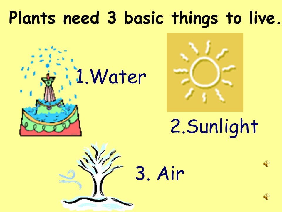 Plants need 3 basic things to live.