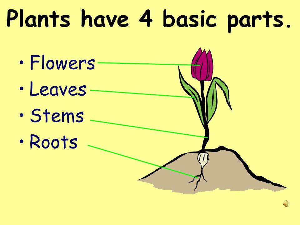 Plants have 4 basic parts.