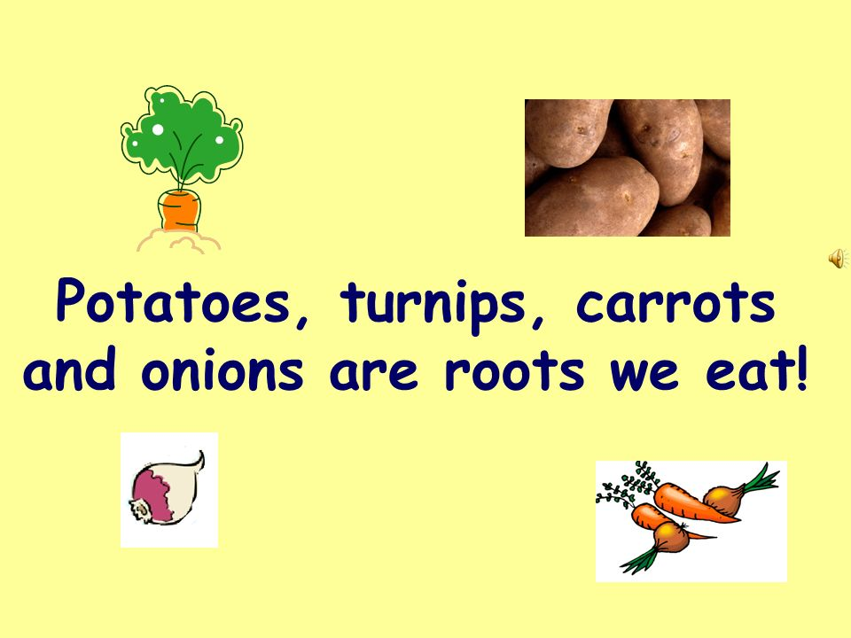 Potatoes, turnips, carrots and onions are roots we eat!