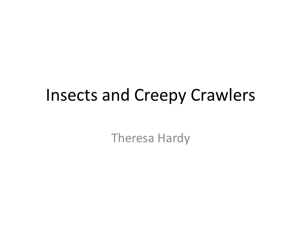 Insects and Creepy Crawlers