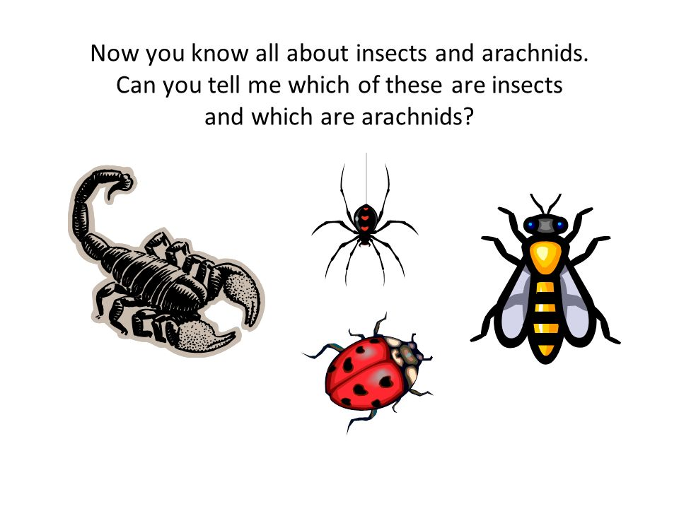 Now you know all about insects and arachnids