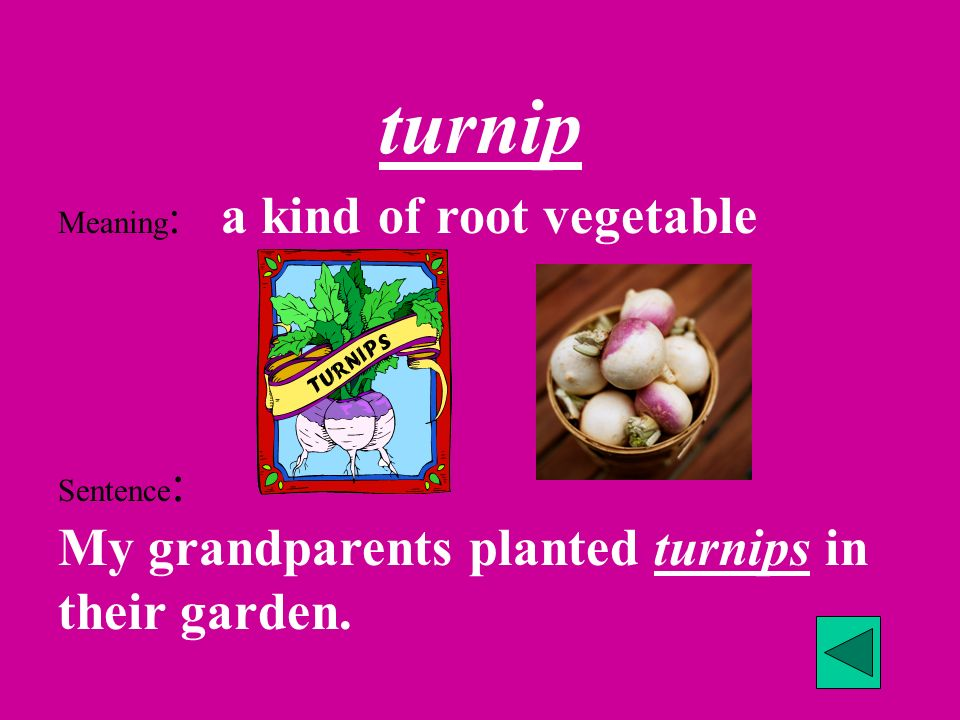 turnip Meaning: a kind of root vegetable