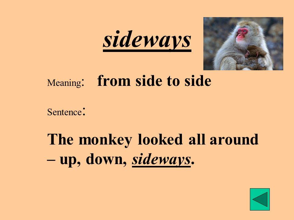 sideways The monkey looked all around – up, down, sideways.