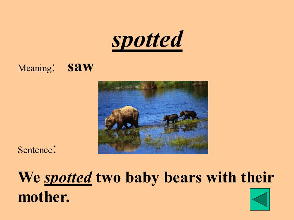 spotted We spotted two baby bears with their mother. Meaning: saw