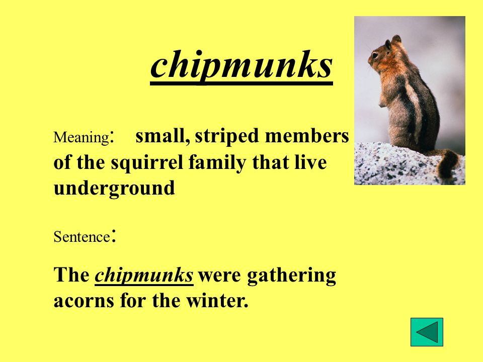 chipmunks The chipmunks were gathering acorns for the winter.