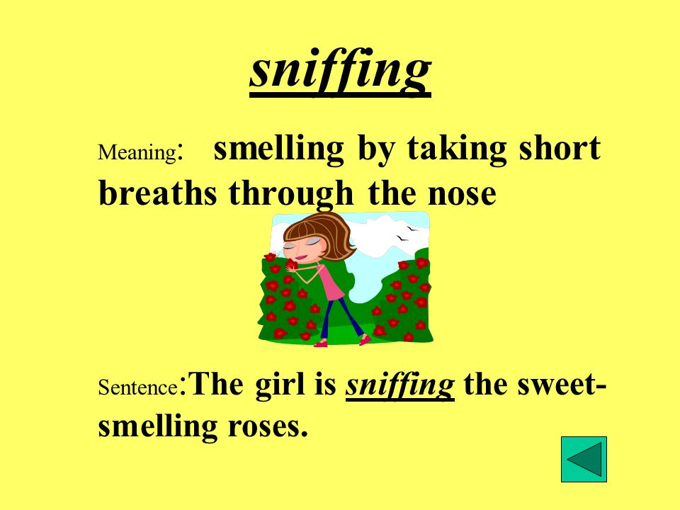 sniffing Meaning: smelling by taking short breaths through the nose