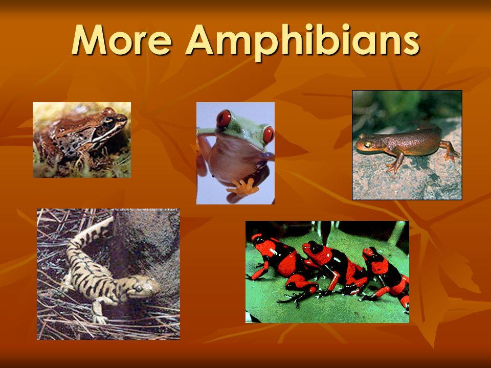 More Amphibians