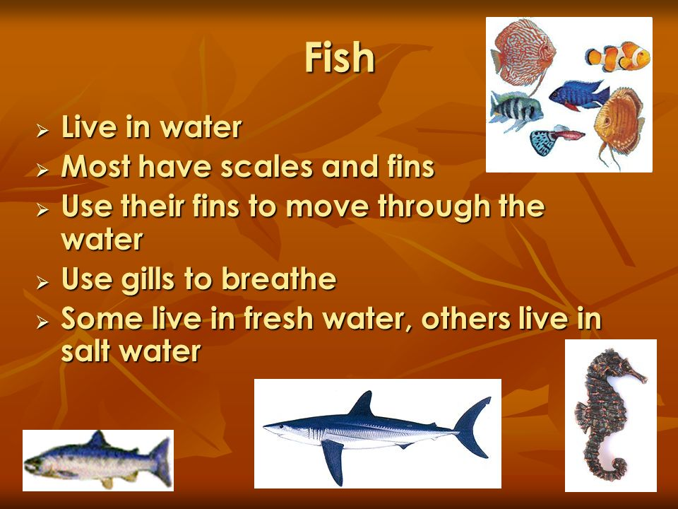 Fish Live in water Most have scales and fins