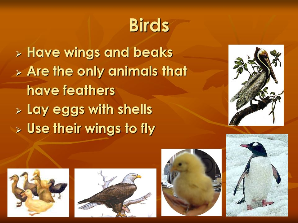 Birds Have wings and beaks Are the only animals that have feathers