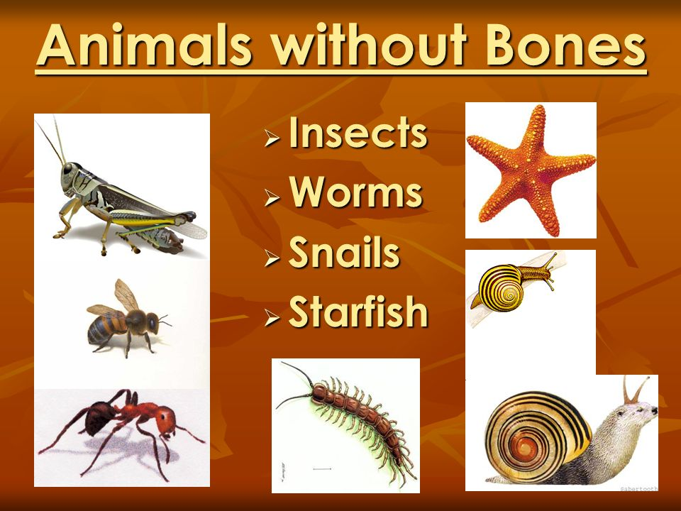 Animals without Bones Insects Worms Snails Starfish