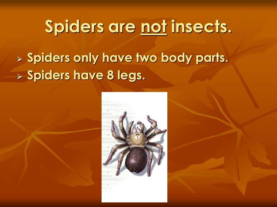 Spiders are not insects.