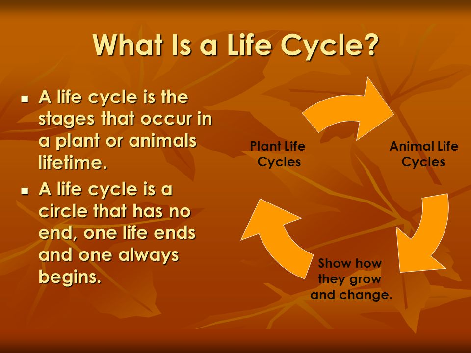 What Is a Life Cycle A life cycle is the stages that occur in a plant or animals lifetime.