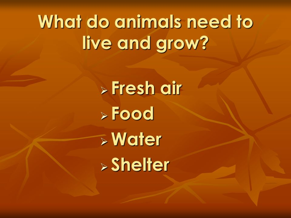 What do animals need to live and grow