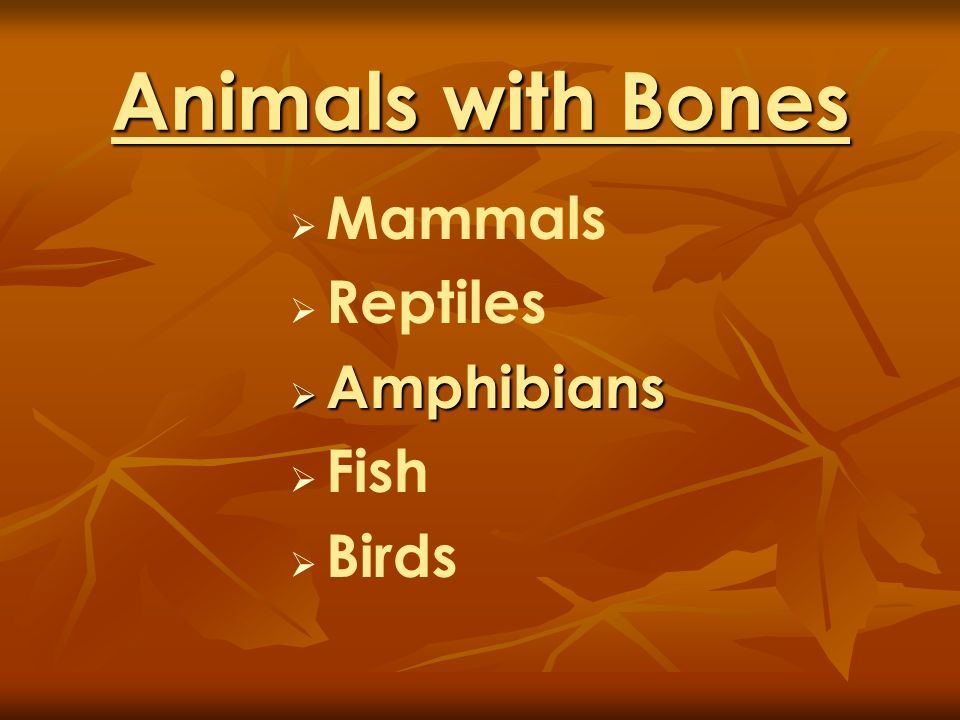 Animals with Bones Mammals Reptiles Amphibians Fish Birds