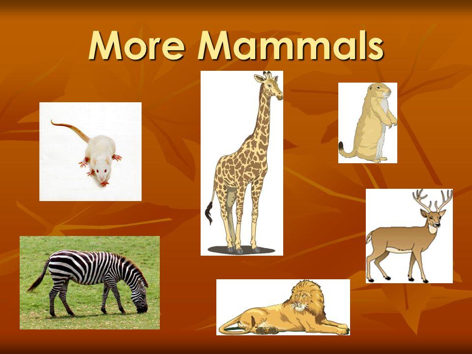 More Mammals