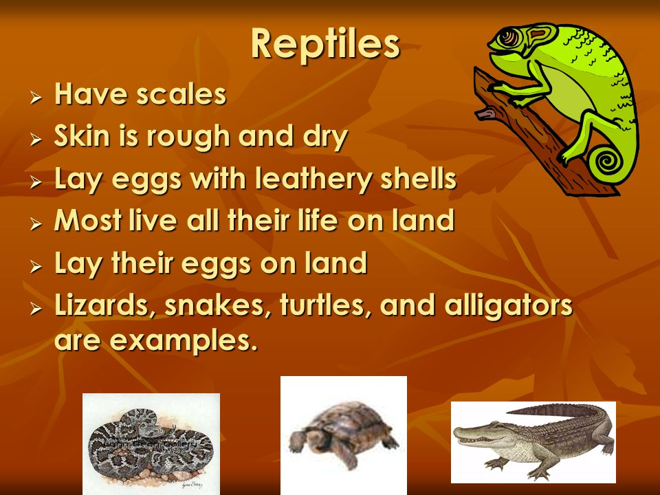 Reptiles Have scales Skin is rough and dry