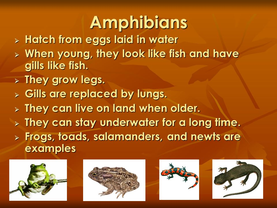 Amphibians Hatch from eggs laid in water