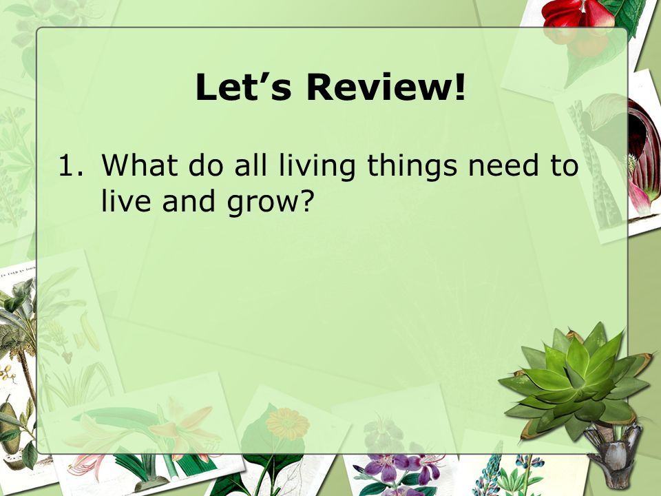Let's Review! What do all living things need to live and grow