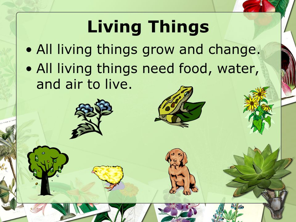 Living Things All living things grow and change.