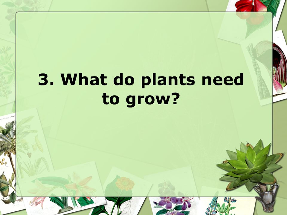 3. What do plants need to grow