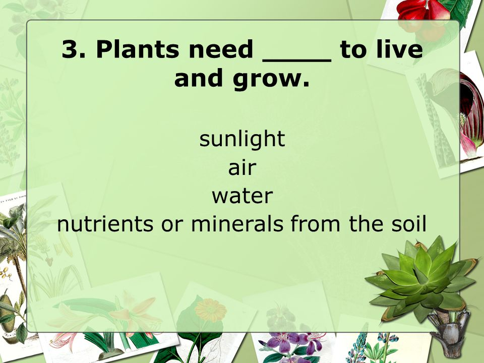 3. Plants need ____ to live and grow.