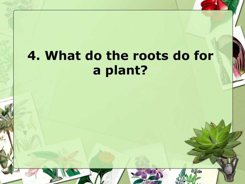 4. What do the roots do for a plant