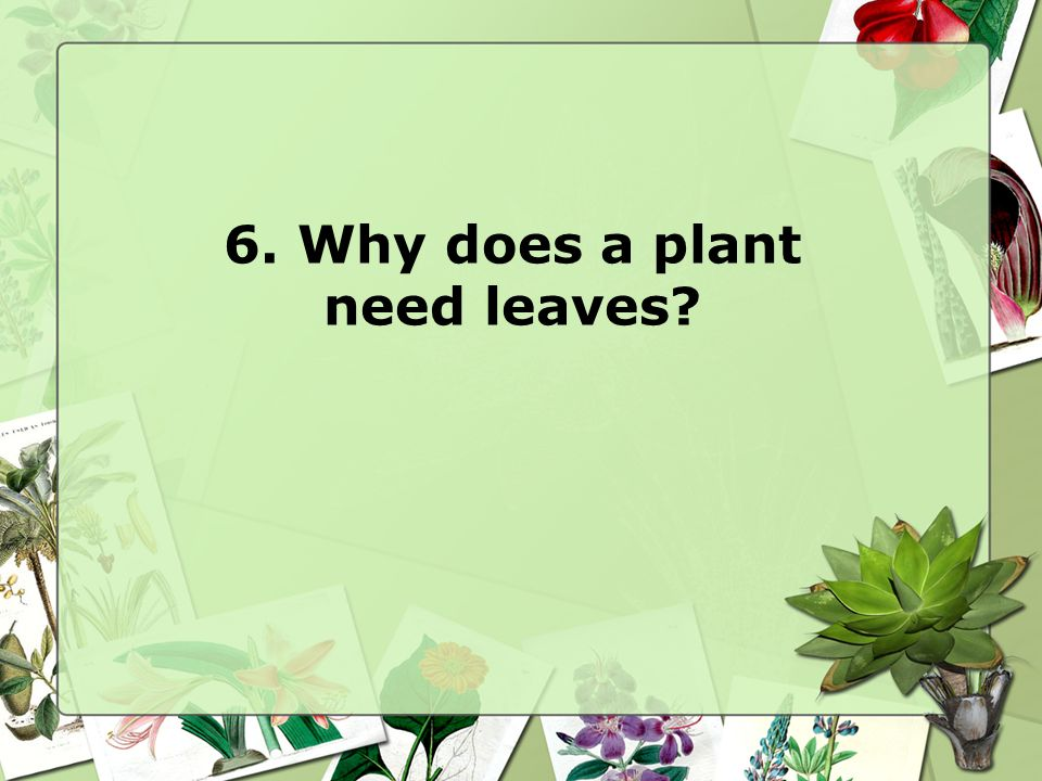 6. Why does a plant need leaves