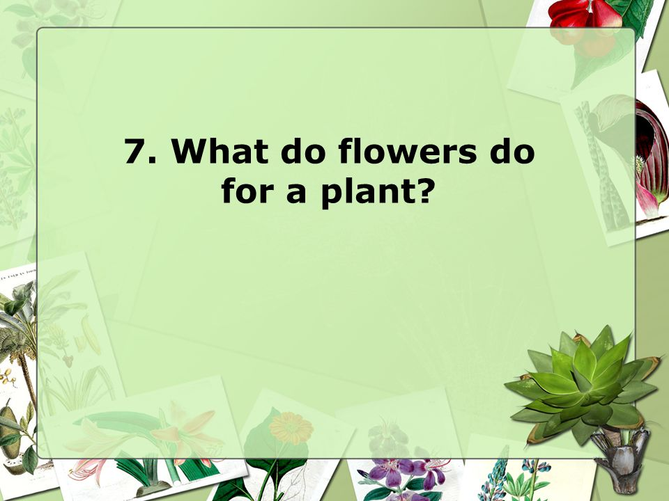 7. What do flowers do for a plant