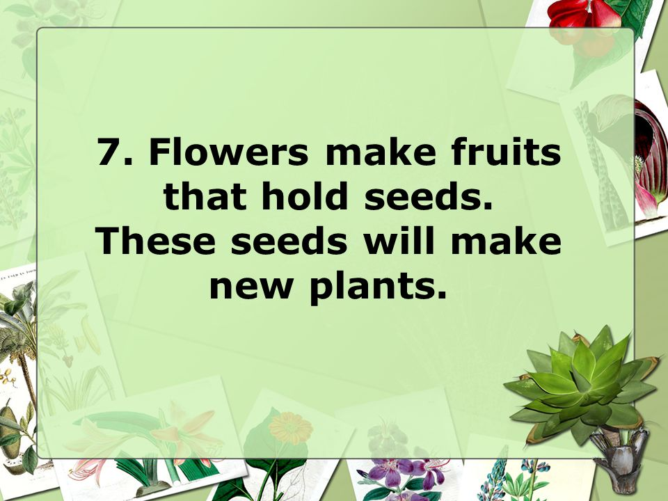 7. Flowers make fruits that hold seeds