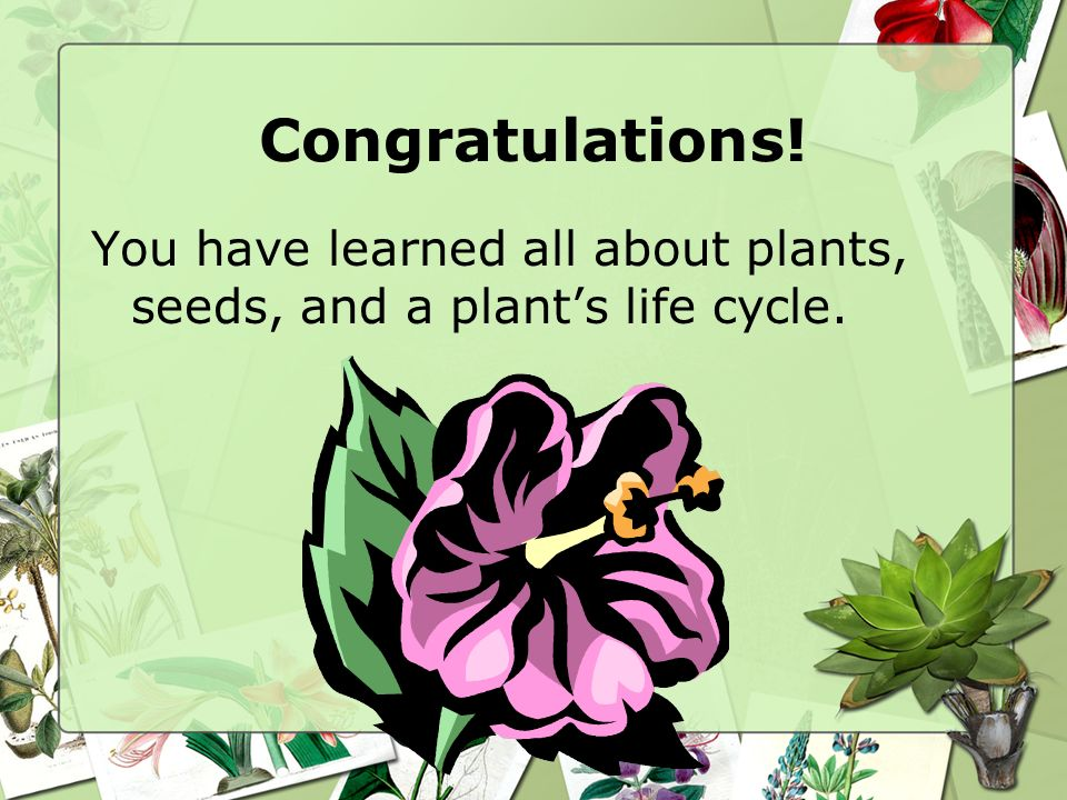Congratulations! You have learned all about plants, seeds, and a plant's life cycle.