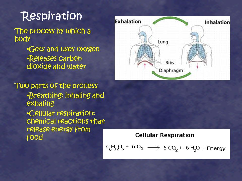 Respiration The process by which a body Gets and uses oxygen