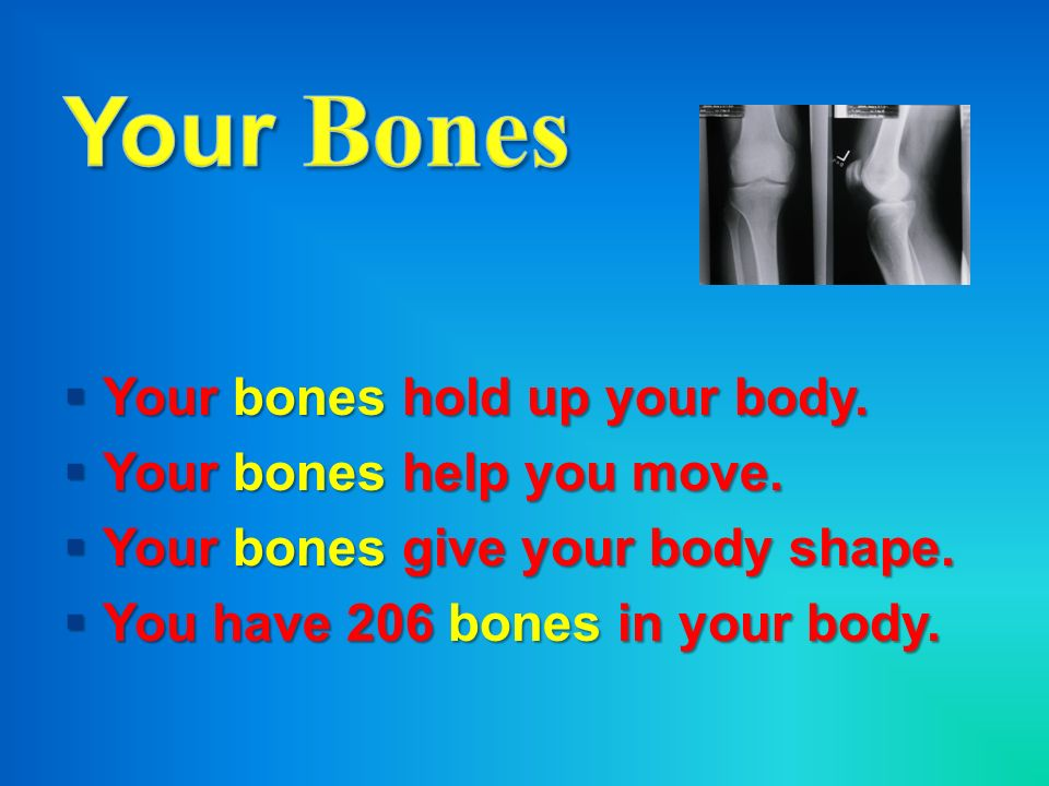 Your Bones Your bones hold up your body. Your bones help you move.